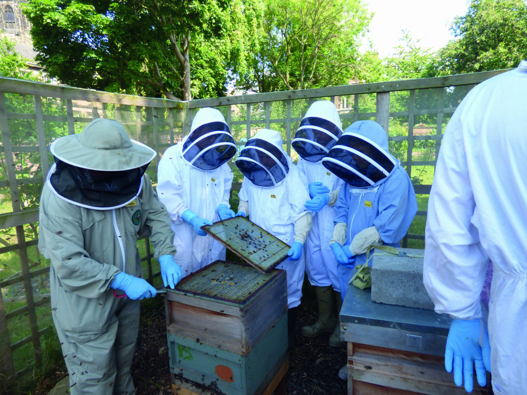 Students in beekeeping clothing examining bees on a screen.